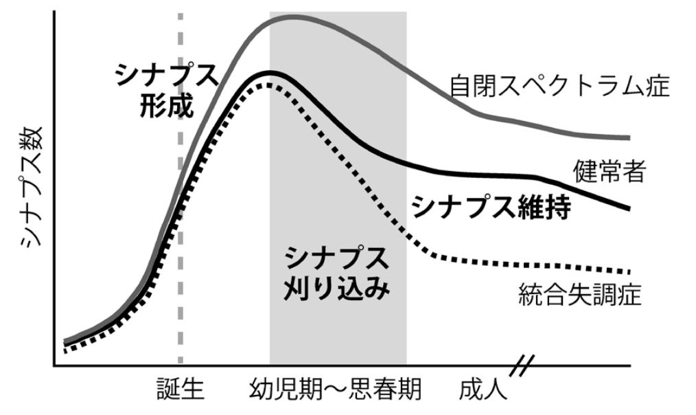 f:id:hirukawalaboratory:20200713010303p:plain