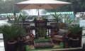 日比谷ガーデンショー銀賞作品。実は弟が絡んでる。宣伝です。都合が