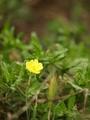 [黄色の花(なんだろ?]