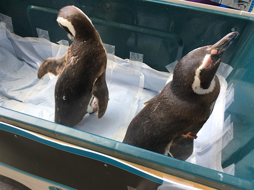博多駅 海きらら ペンギン