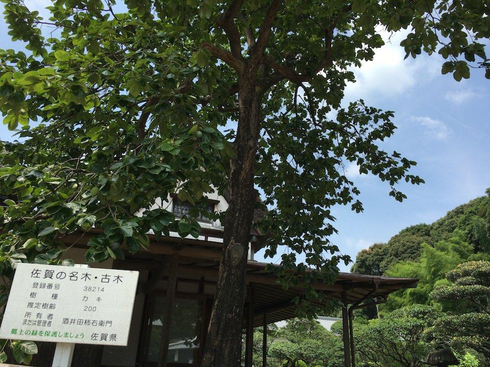 柿右衛門窯 柿の木