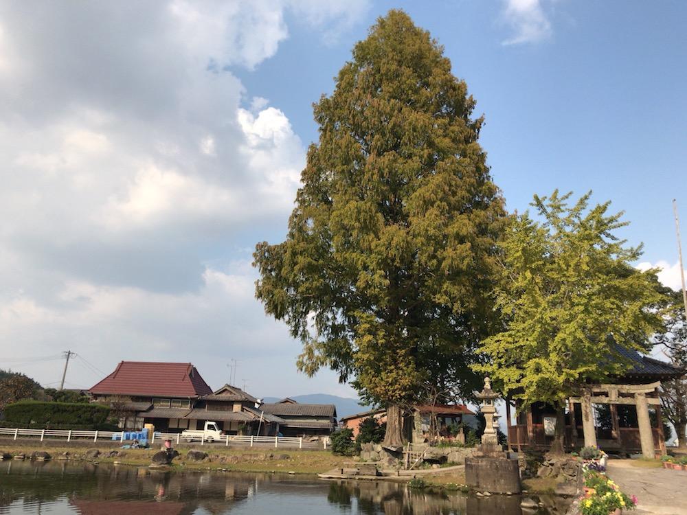 佐賀県 白石町 縫ノ池 2016