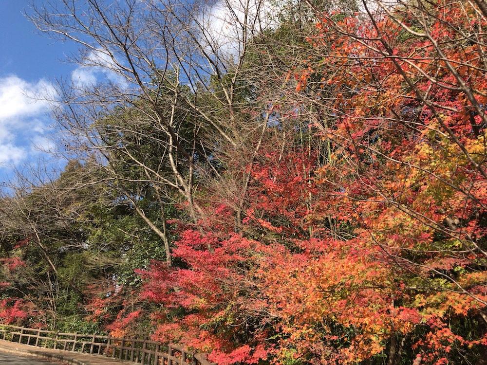 2016 佐賀 神埼 紅葉