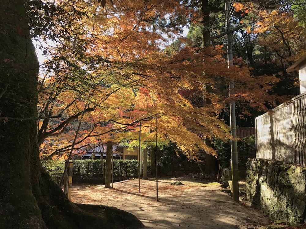 仁比山神社 2016紅葉 終盤