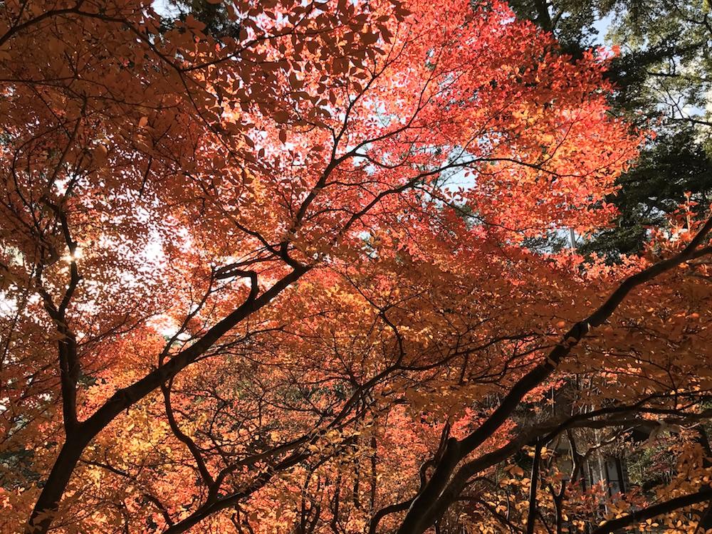 仁比山神社 2016紅葉 12月