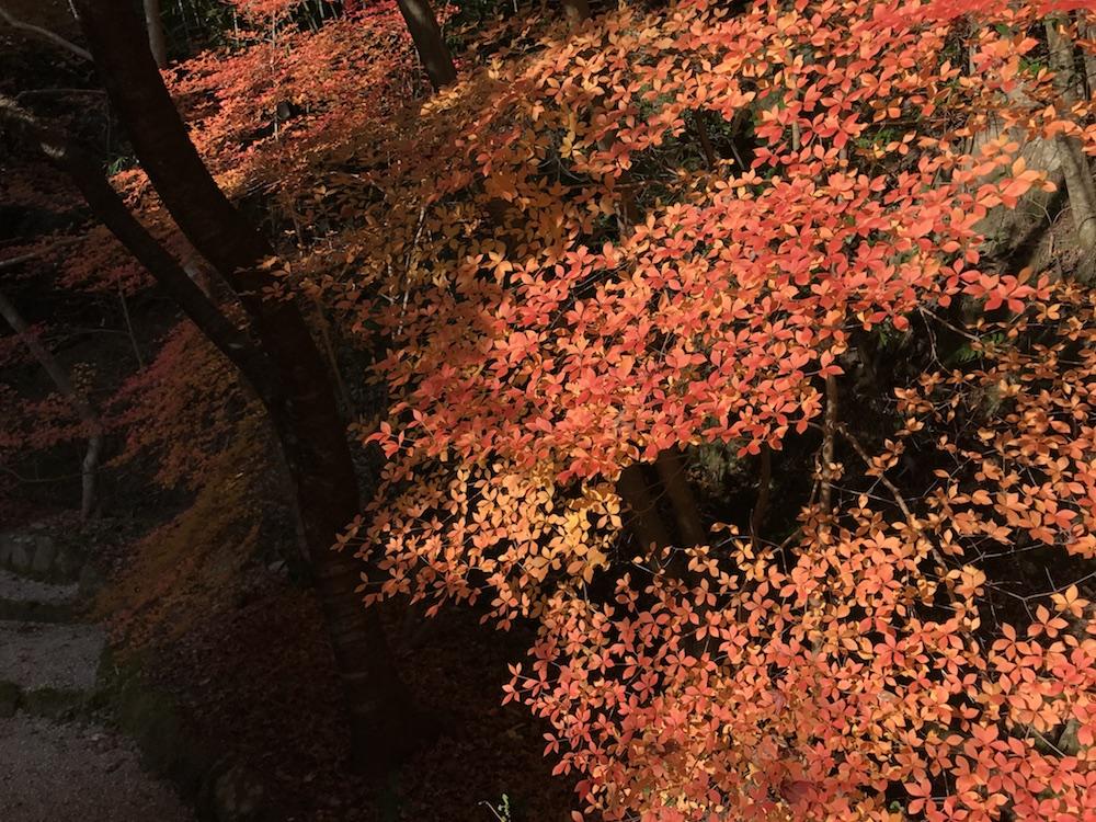 仁比山神社 2016紅葉