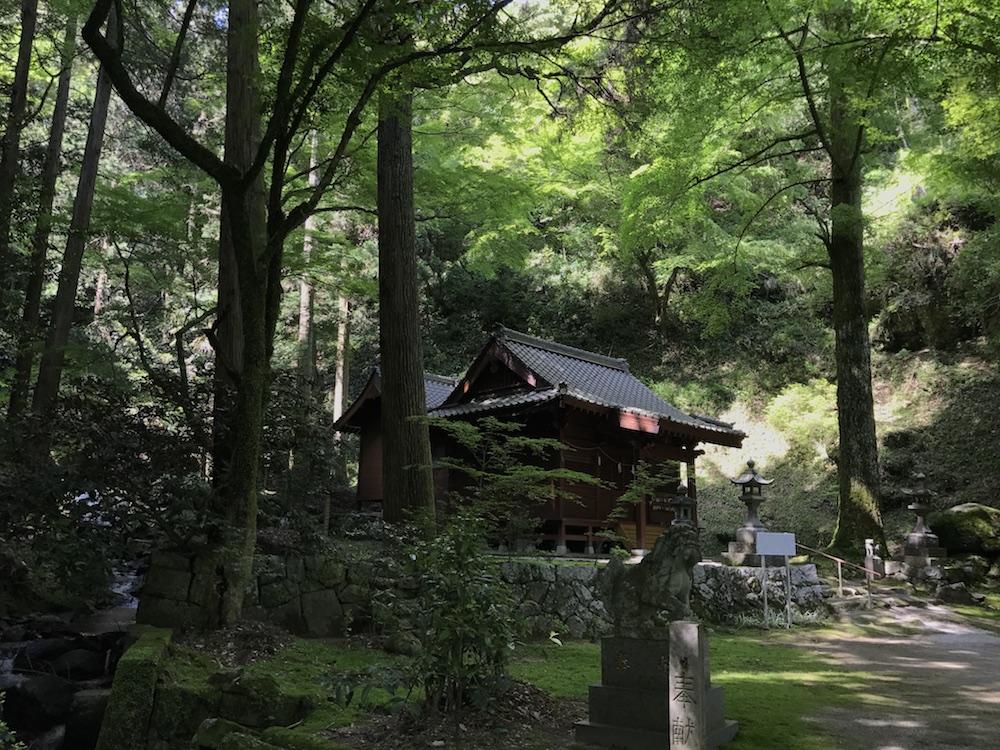新緑の後鳥羽神社