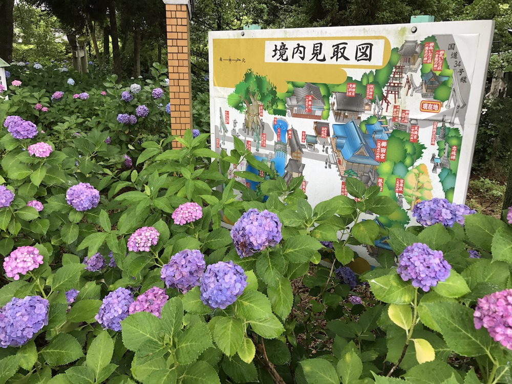 2017 櫛田宮 あじさい