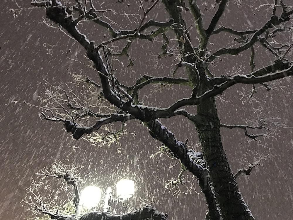 2018.2.11 大雪