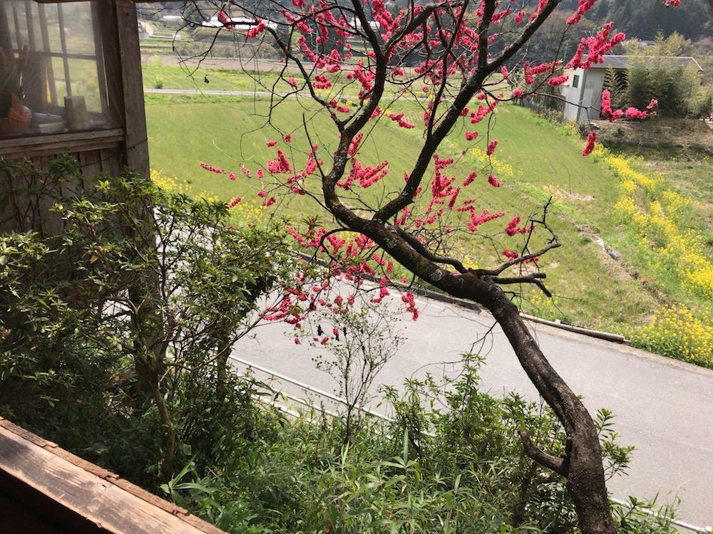 名尾庵 窓からの風景