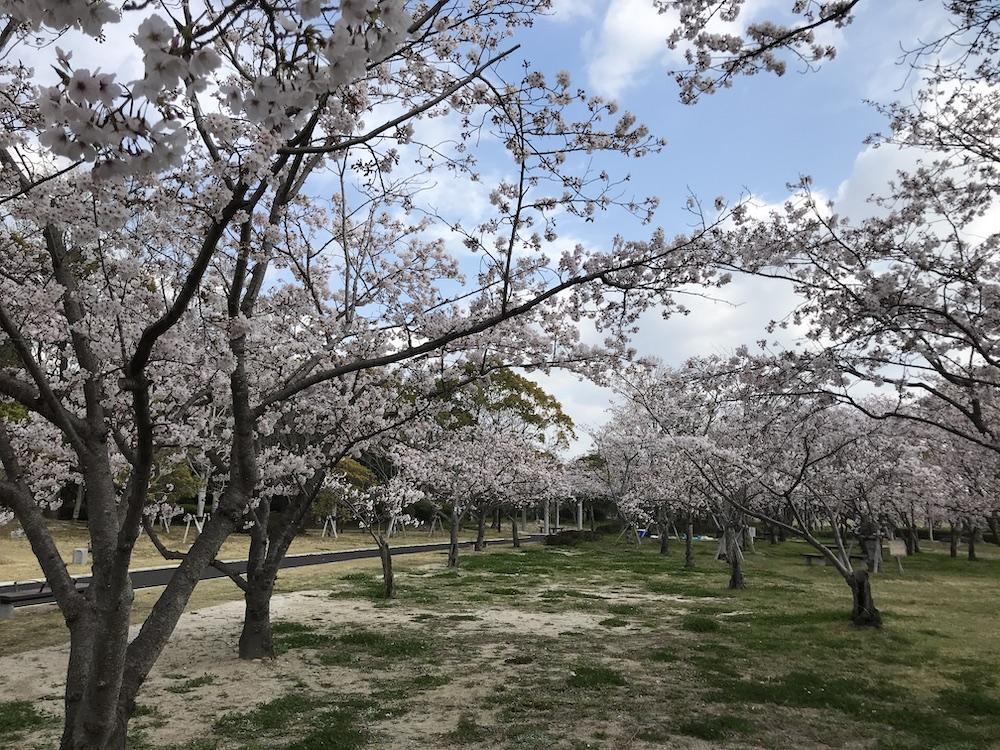 2019 佐賀森林公園 桜