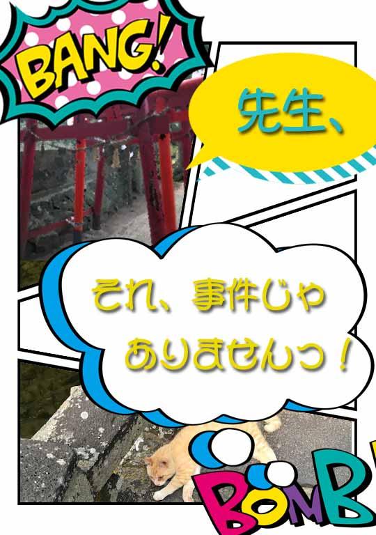 f:id:hishinumaayu:20190611102547j:plain