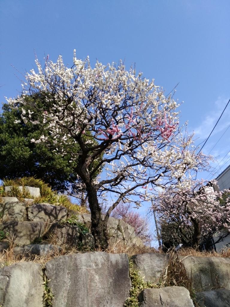 f:id:hisshinohisshy:20180304151214j:plain