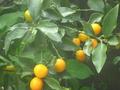 [植物][果物][果実]