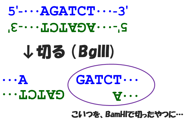 f:id:hit-us_con-cats:20210728055031p:plain