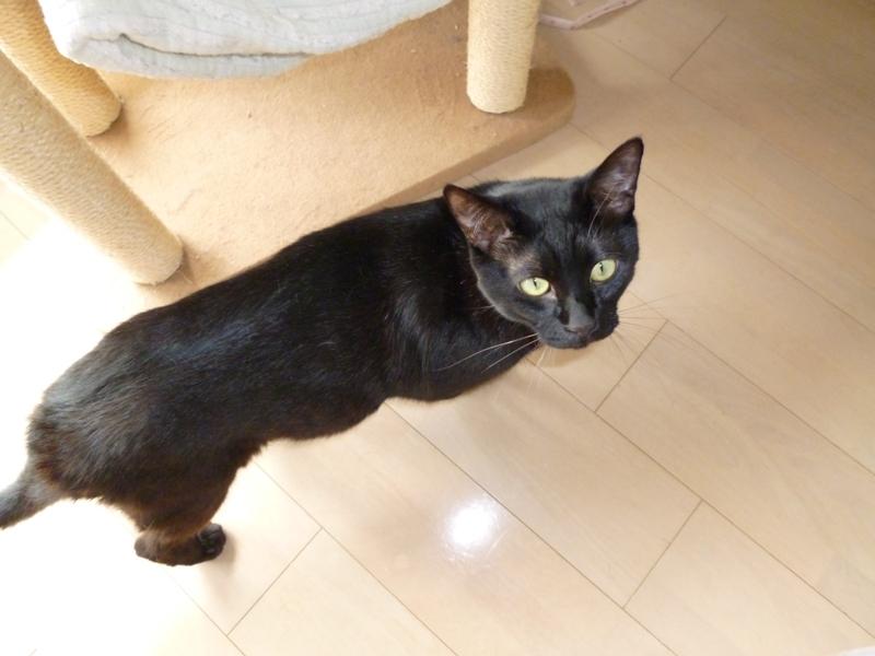 f:id:hitachibana:20120415134446j:plain