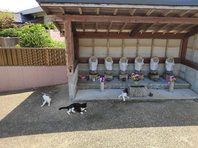 f:id:hitachibana:20190911005828j:image