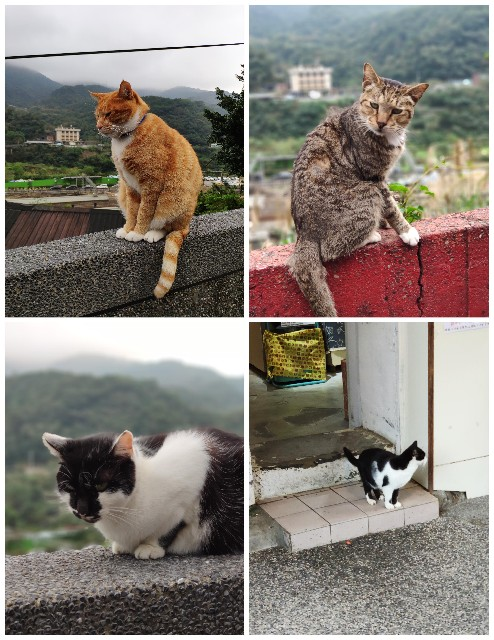 f:id:hitachibana:20200113152515j:image
