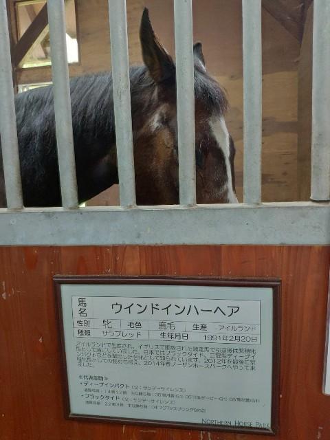 f:id:hitachibana:20200808010318j:image