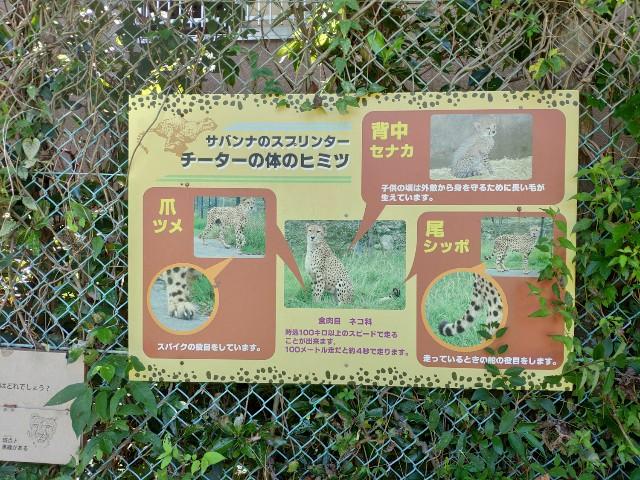 f:id:hitachibana:20200815231800j:image