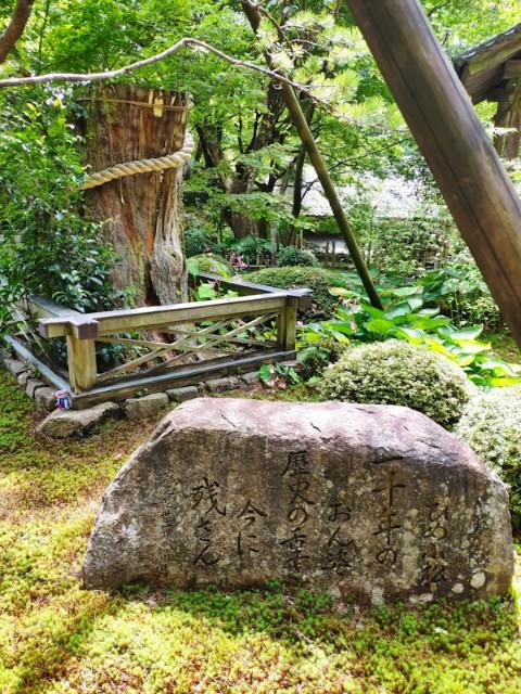 f:id:hitachibana:20200923202148j:image