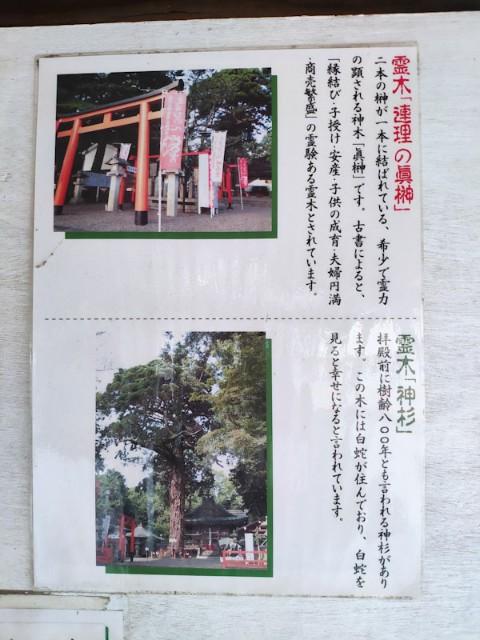 f:id:hitachibana:20200923230928j:image