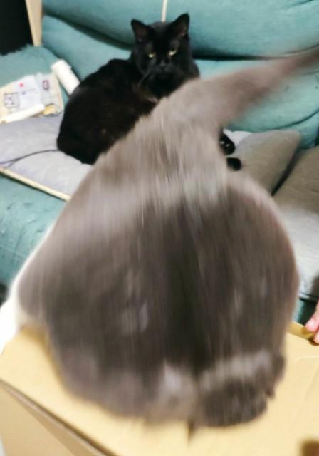 f:id:hitachibana:20201025213026j:image