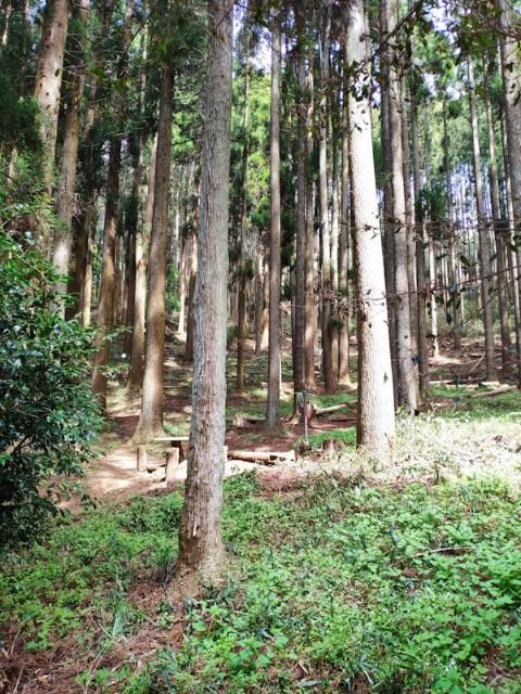 f:id:hitachibana:20210404013956j:image