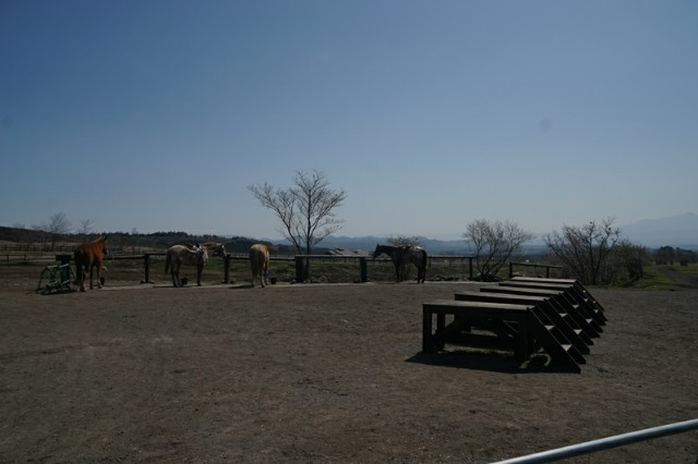 f:id:hitachibana:20210413082754j:image