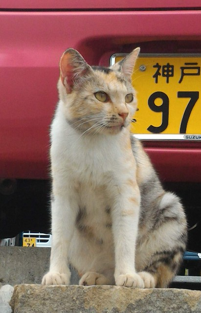 f:id:hitachibana:20210523030409j:image
