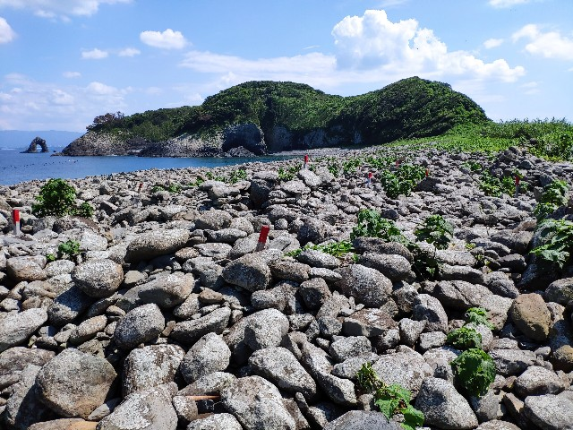 f:id:hitachibana:20210531002502j:image