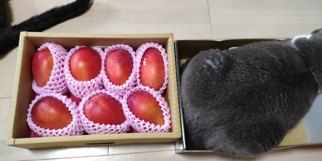 f:id:hitachibana:20210613172742j:image