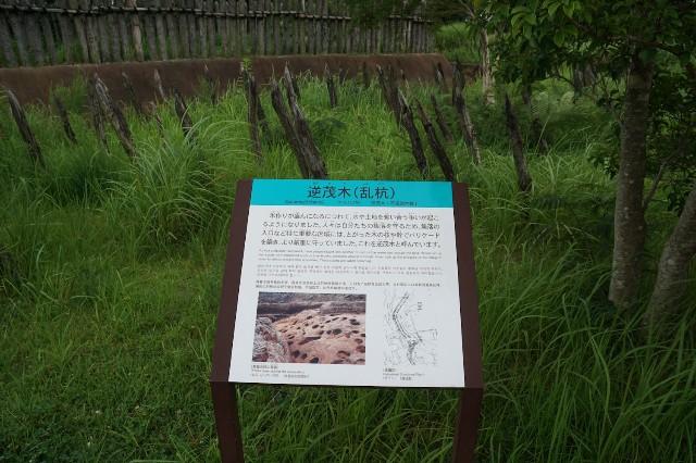 f:id:hitachibana:20210723085801j:image