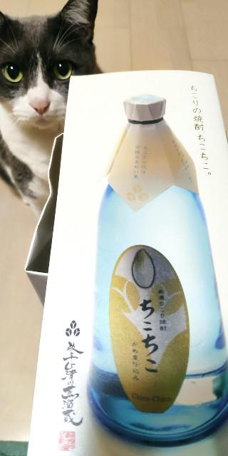 f:id:hitachibana:20210804191657j:image