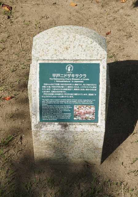 f:id:hitachibana:20210808033102j:image