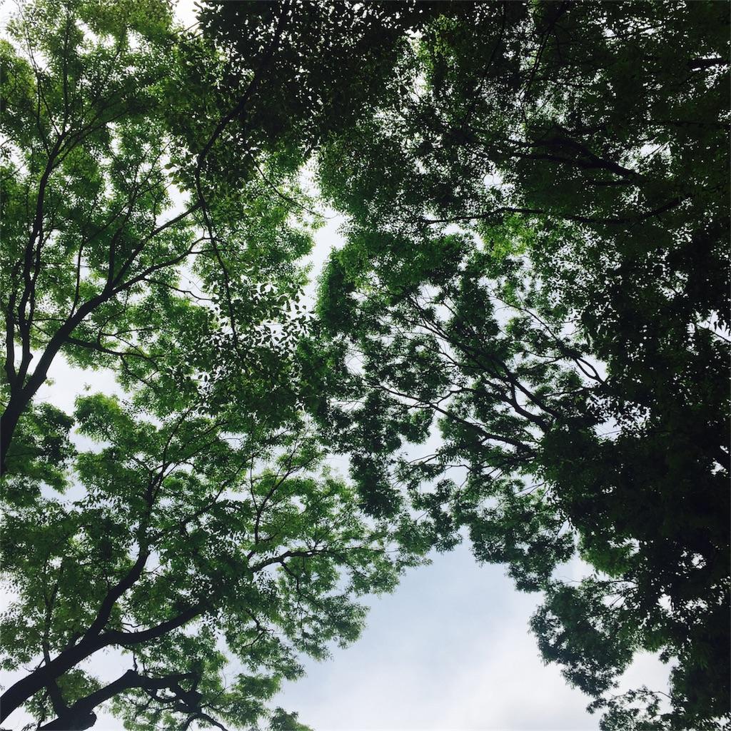 f:id:hitomi-healing-8:20170503120324j:image