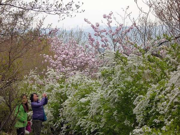 花見山公園12:plain