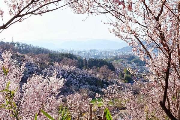 花見山公園14:plain