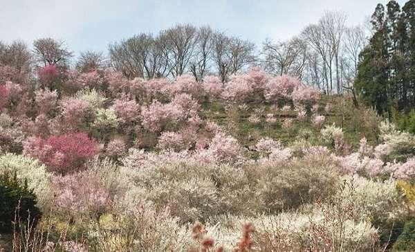 花見山公園15:plain