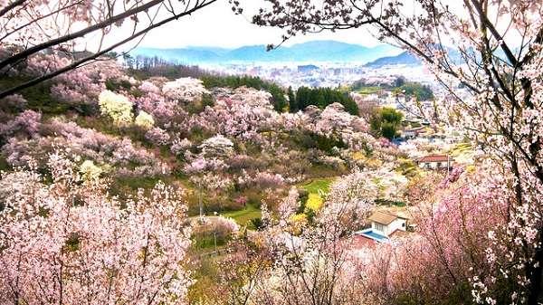 花見山公園17:plain