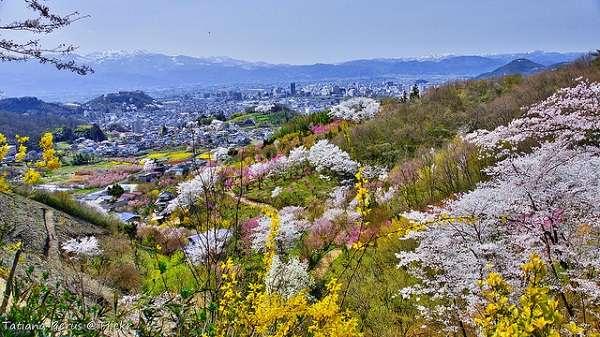 花見山公園18:plain