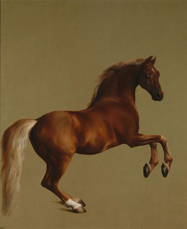 The National Gallery Whistlejacket  George Stubbs