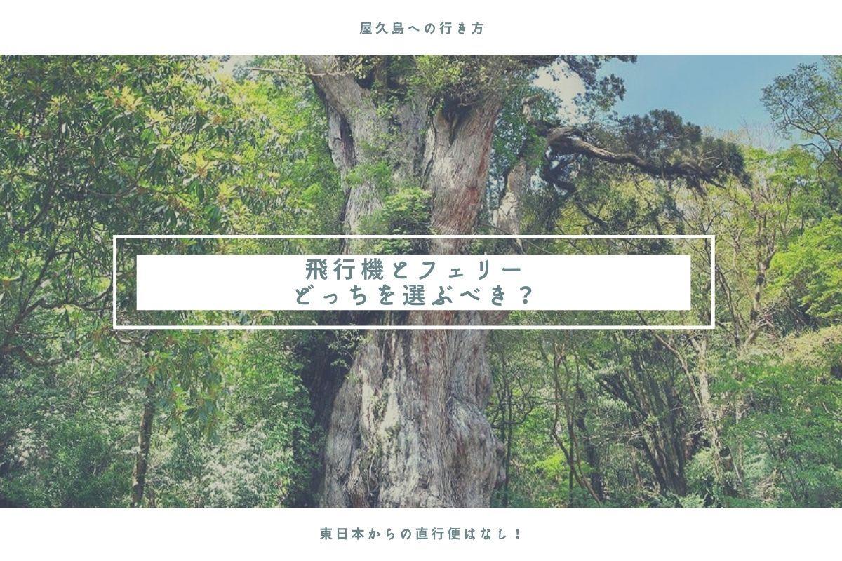 yakushima-root
