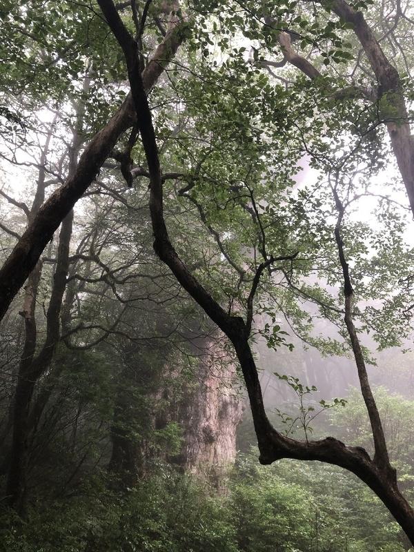 縄文杉トレッキングツアー
