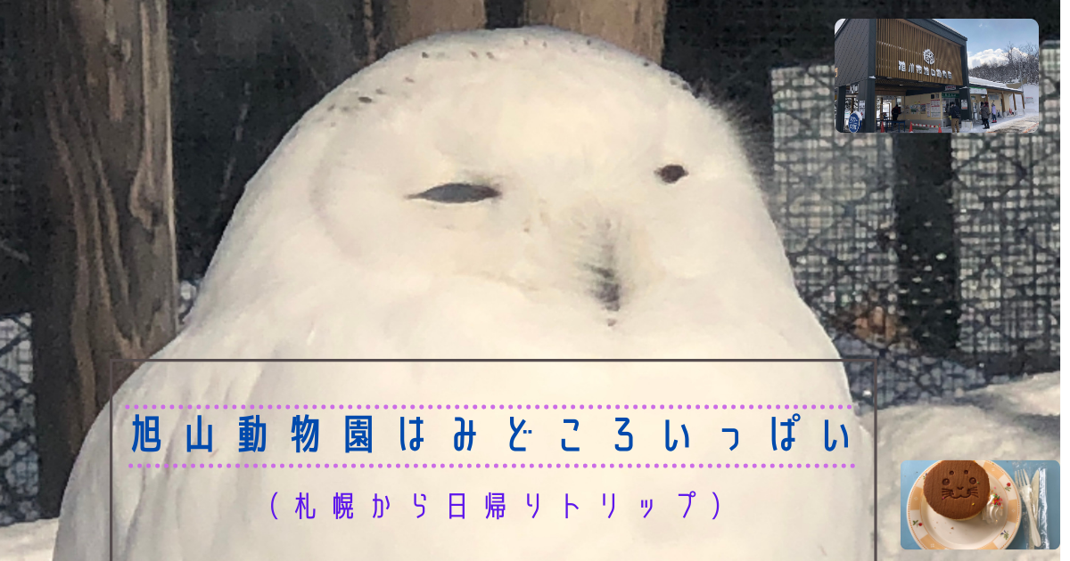 f:id:hitomi-shock:20210306132434p:plain