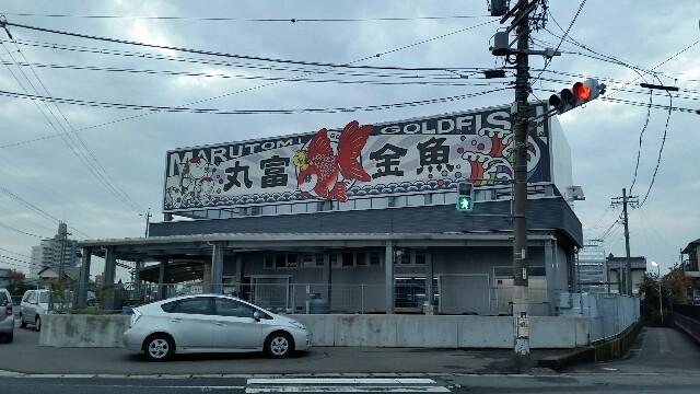 f:id:hitomichi550617:20161119204834j:image