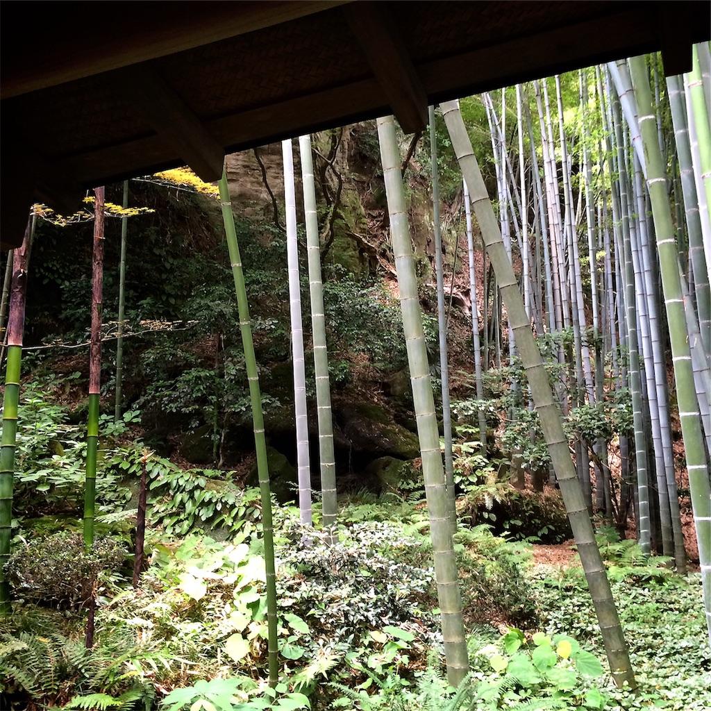 f:id:hitomihoshimi:20190216084333j:image