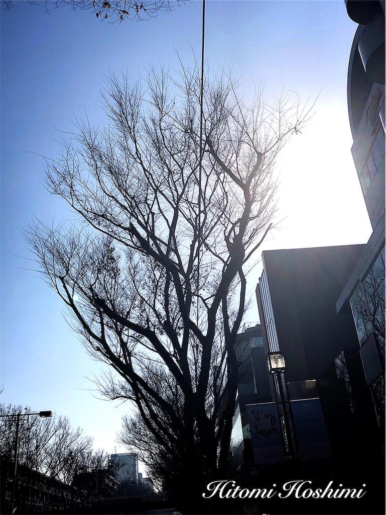 f:id:hitomihoshimi:20190220093535j:image