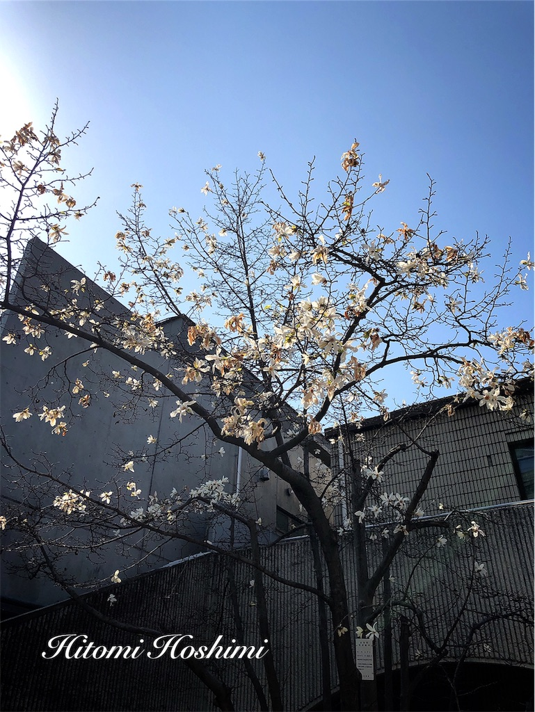 f:id:hitomihoshimi:20190325095237j:image