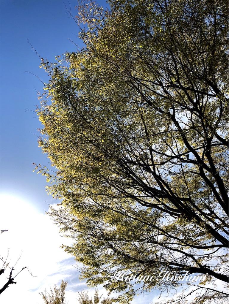 f:id:hitomihoshimi:20190405081448j:image